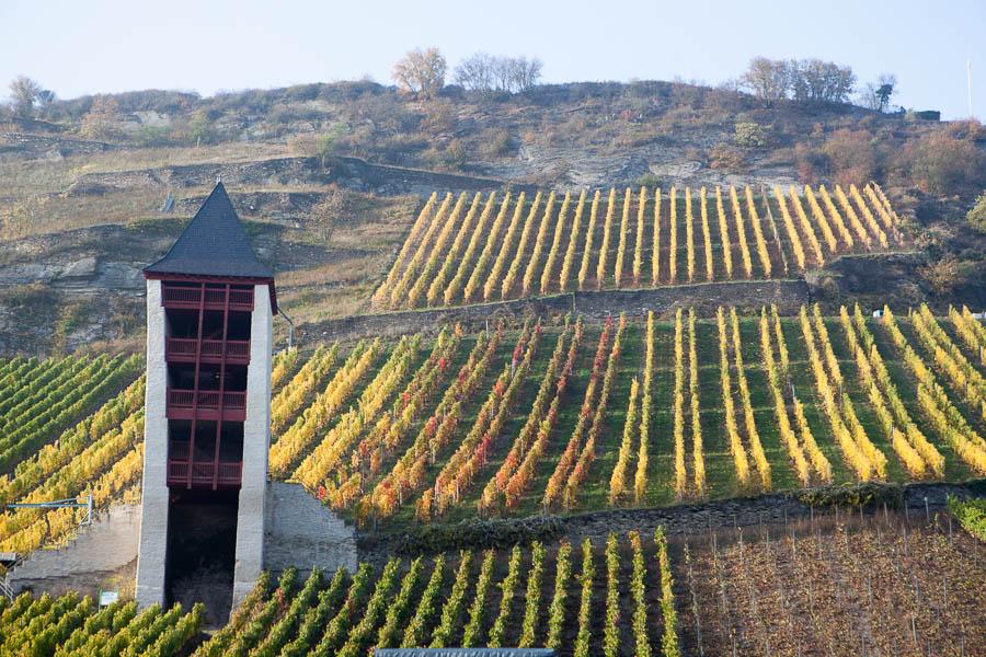 2012-10-24_16-27-34_rheinfahrt__mg_3992-500