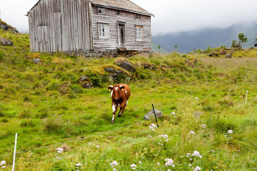 2013-07-18_11-09-40_Norwegen2013__MG_7277-1600