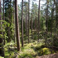 2015-08-04_10-46-23_Südschweden - Nora Kvils__MG_2755-1600