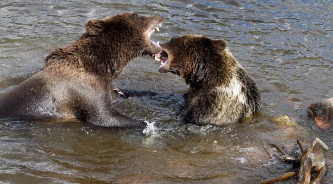 Schweden – Sehenswert: Mora Bärenpark Orsa