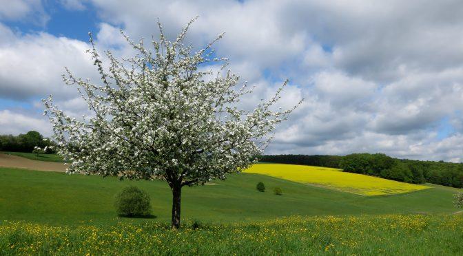 Fränkische Saale – unser Tip für den spontanen Wohnmobil-Trip