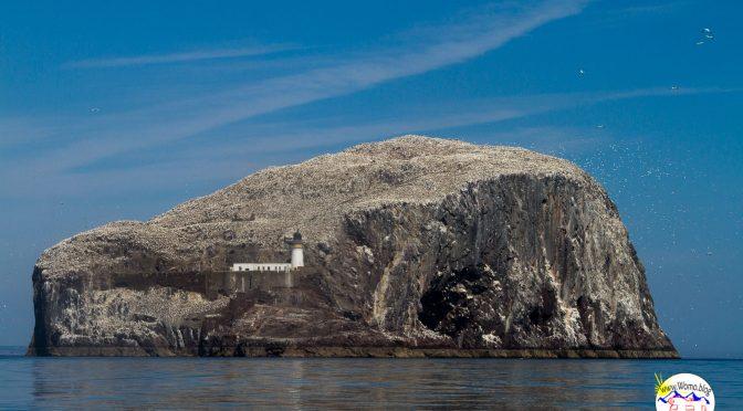 Schottland – Bass Rock – mit den Basstölpeln auf Du und Du
