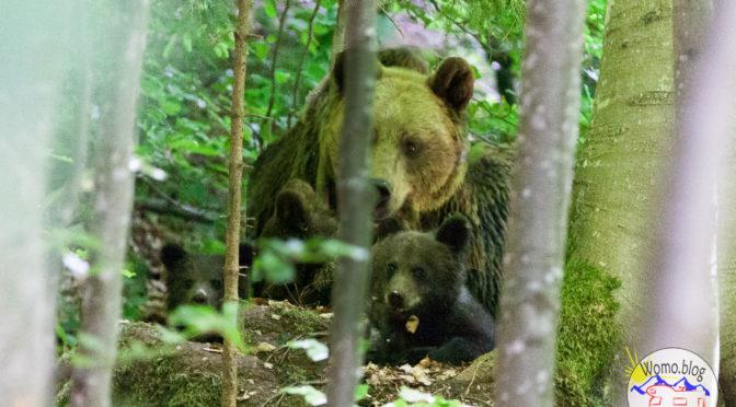 Rumänien – Die Bären sind los