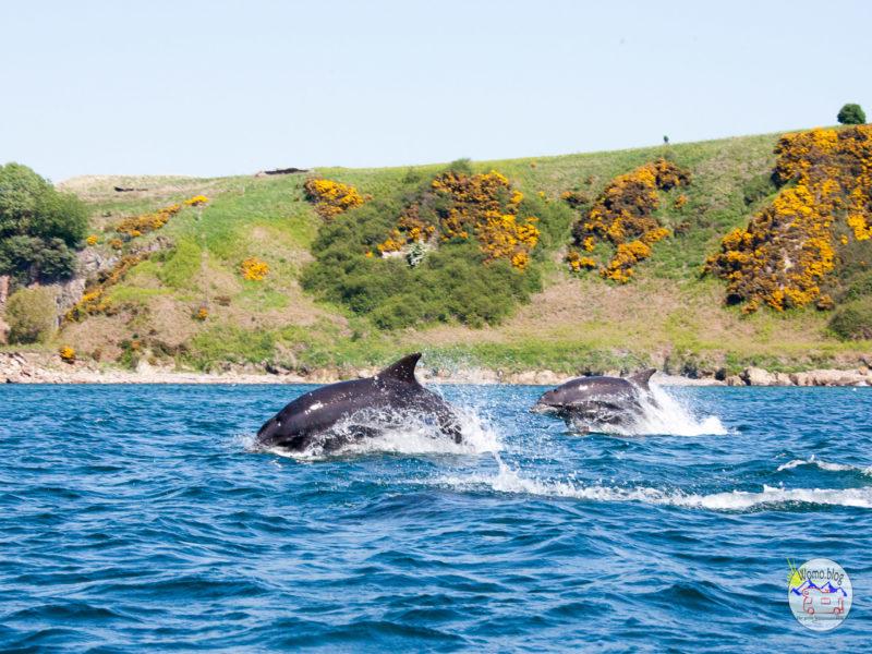 2018-05-28_11-59-33_Schottland-Delfin__MG_9692-2560