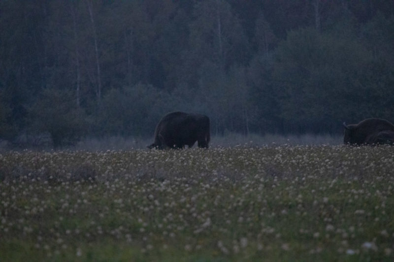 2020-10-04_06-05-08_Wisent_IMG_5596-1600