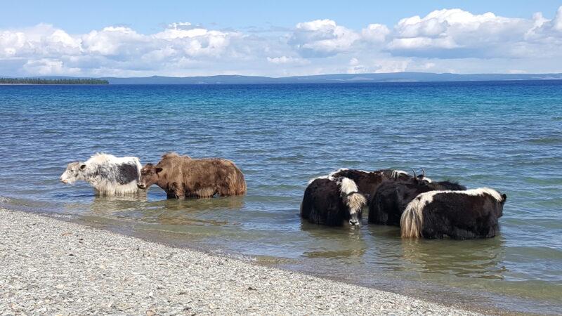 Der Khovsgol See ist der zweitgrößte See des Landes nach der Fläche und der größte nach dem Volumen. Er hat große Bedeutung als Trinkwasser-Reservoir sowie als touristisches Reiseziel (c) Ethno Mongol