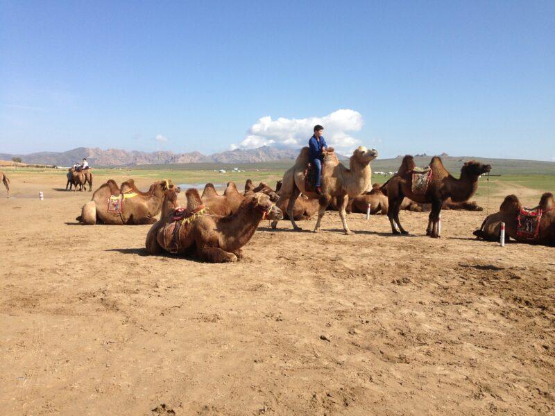 (c) Ethno Mongol
