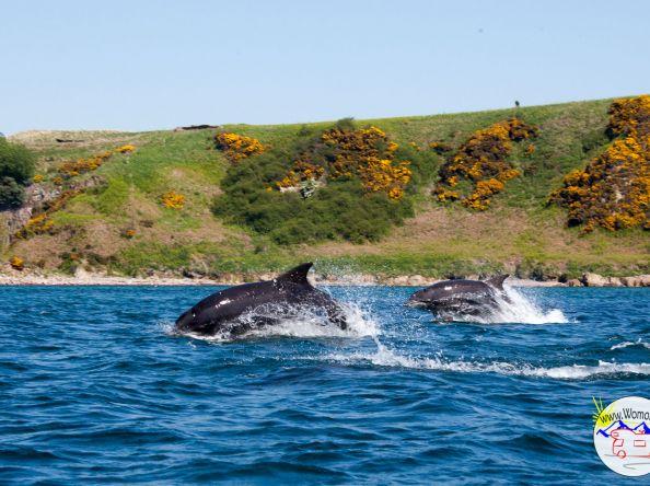 Schottland: Mit Delfinen kajaken!