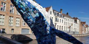 Was macht der Buckelwal in Brügge?